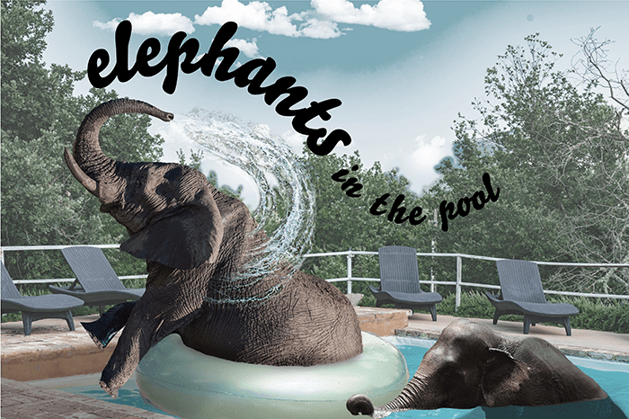 elephantsinthepool_WEB